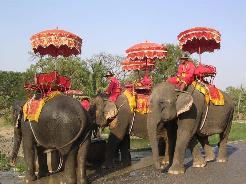 Ayutthaya Elephant Camp