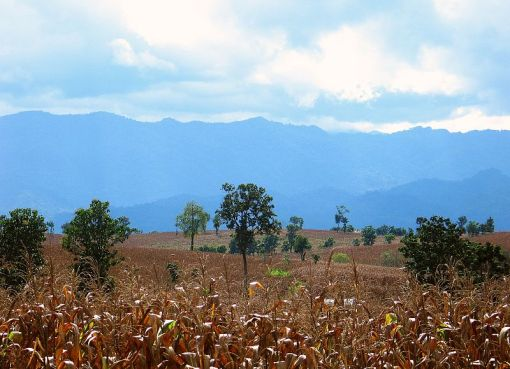 View over the cornfields towards the mountains of Burma in Mae Sot