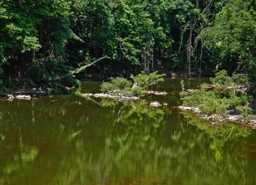 A pond in Thailand