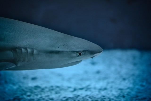 Expert believes Norwegian tourist attacked by a bull shark