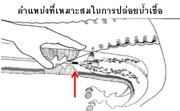 AI Position.jpg