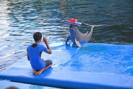 dolphin_world