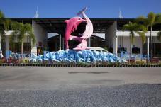 dolphin_world2