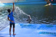 dolphin_world3