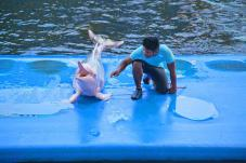 dolphin_world4
