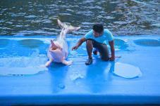 dolphin_world4