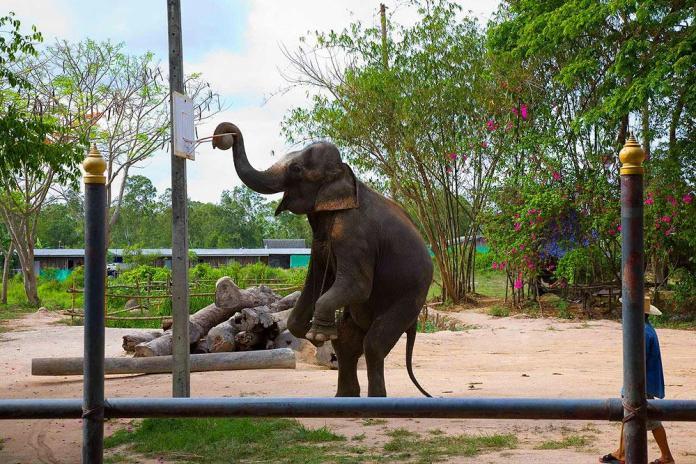 elephantv1