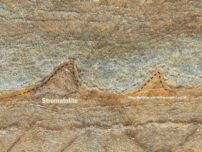 ค้นพบซากฟอสซิลของสิ่งมีชีวิตที่เก่าแก่ที่สุด 3.6 พันล้านปี