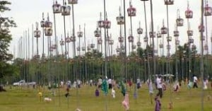 Dove Festival