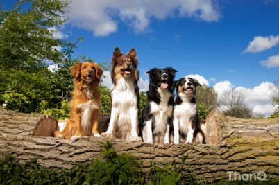 Beste hondenfoto's uit 2014 - groepsfoto met honden