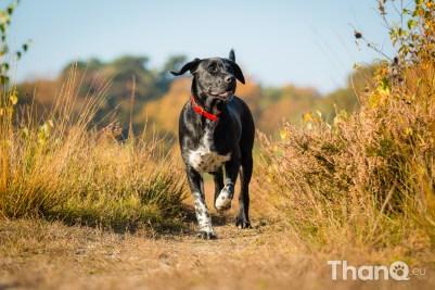 Finley (kruising) - Hondenfoto's bij De Heide, Bergen op Zoom