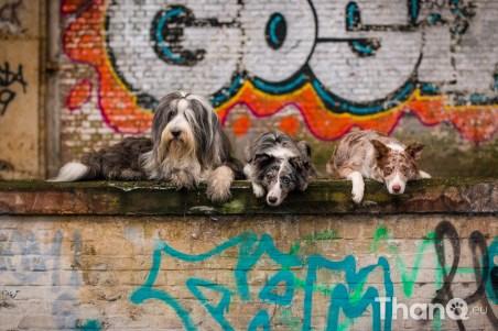 Hondenfoto met Bo, Ziva, Magic