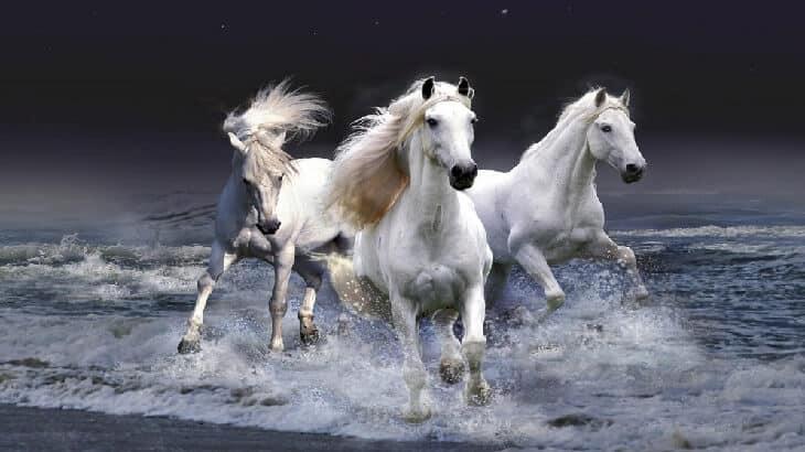 تفسير رؤية حصان في الحلم