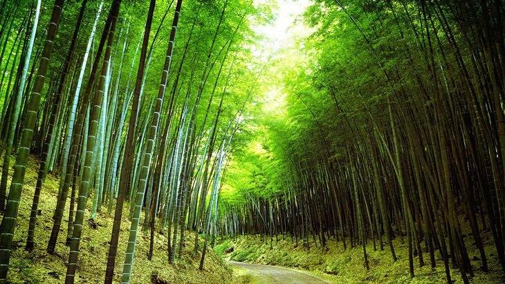 تفسير رؤية الاشجار في الحلم ومعناه