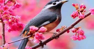 موضوع تعبير عن الطيور التي لا تطير بالأفكار