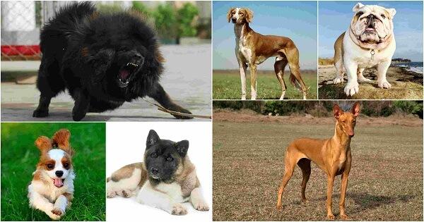 افضل واحسن انواع الكلاب للتربية في المنزل