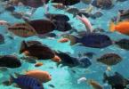 تفسير رؤية صيد السمك باليد ومعناه بالتفصيل