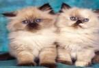 كيفية تدريب القطط الصغيرة على صندوق الرمل