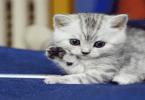 كيفية تربية القطط الصغيرة حديثة الولادة
