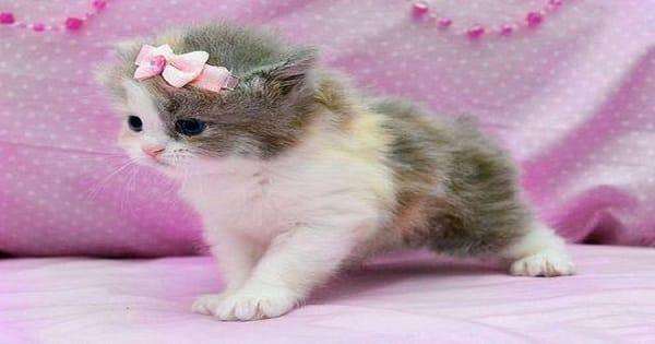 كيفية علاج داء القطط بالاعشاب الطبيعية