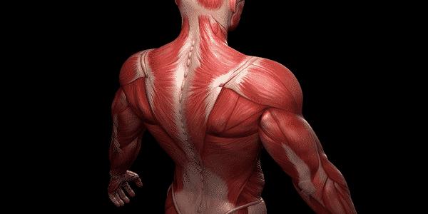 معلومات عن عضلات الجسم وأسمائها معلومة ثقافية