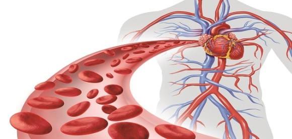 ما هي تمارين القلب والأوعية الدموية