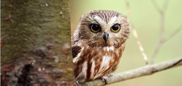 Seeing the owl in a dream interpretation seeing the owl in a dream interpretation of imam sadiq