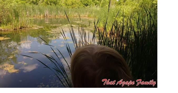 Pond Paradise WM