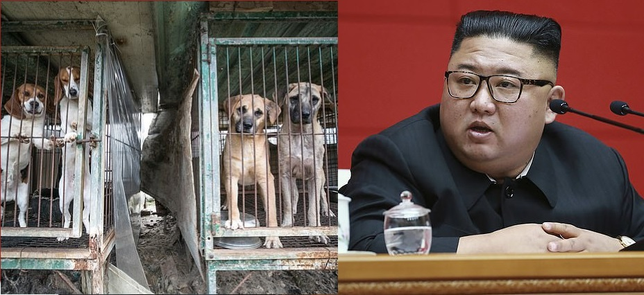 Kim Jong-Un, North Korea President, orders North Koreans to hand over their pet dogs to be used as meat as the country is rocked by food shortages