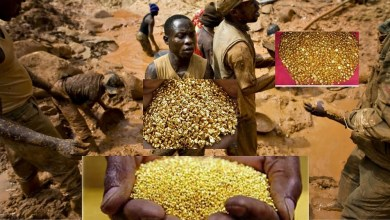 Congolese Villagers Discover a Mountain Full of Gold, 90% Soil are Gold Deposits (VIDEO)