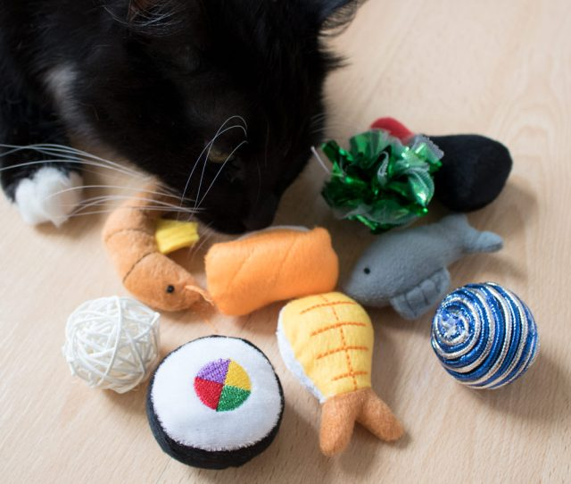 That Daily Deal Is Giving Away A Free Cat Toy Or Treat With No Shipping Or Outside Fee You Wont Know What Youll Get But Its Free