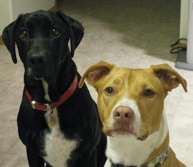 My dog Ace and his friend Sammi