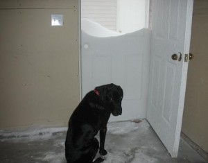 Dog at door with three feet of snow