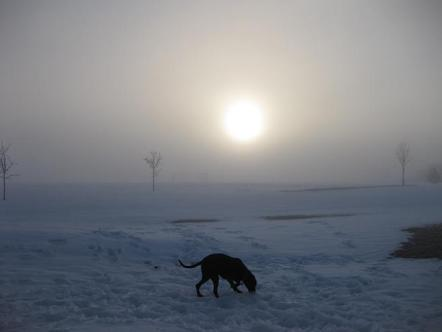 Black dog playing in the snow and ice