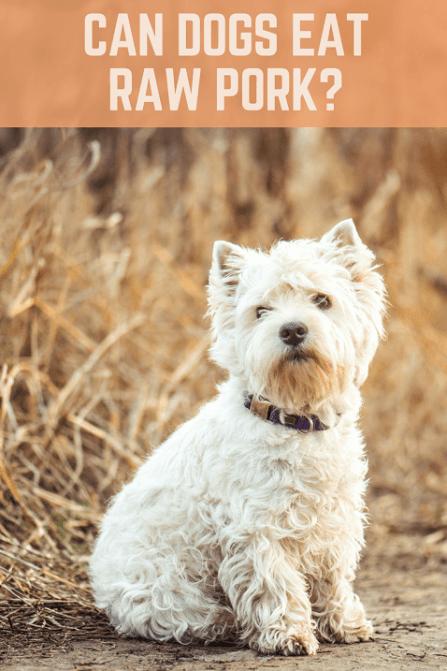 Can Dogs Eat Raw Pork?   ThatMutt com: A Dog Blog