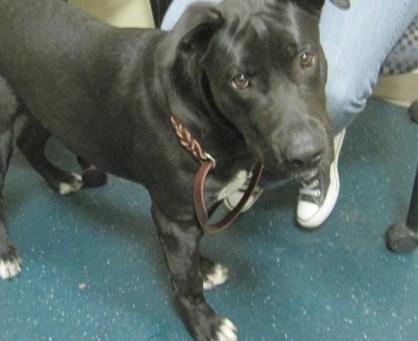 Tour with San Diego Humane Society | ThatMutt com: A Dog Blog