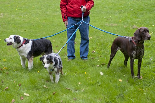 Three dogs attached