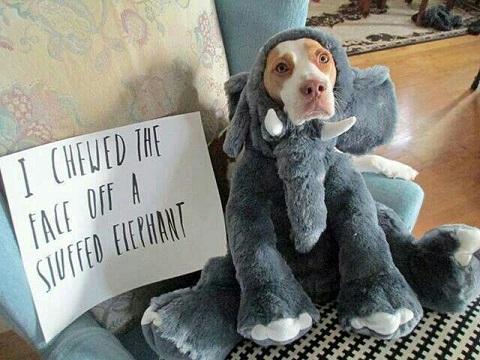Dog chews the stuffed animals