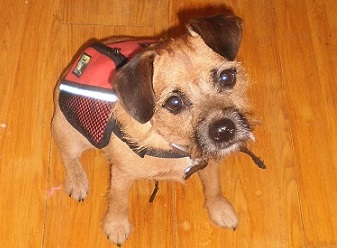 Dog backpacks for small dogs