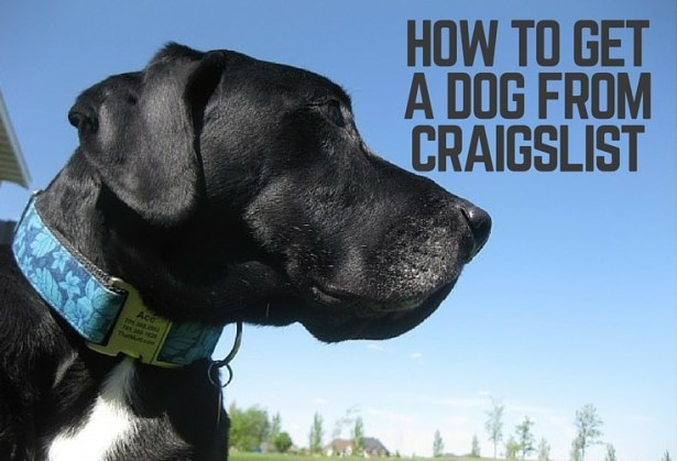 How to get a dog from Craigslist | ThatMutt com: A Dog Blog