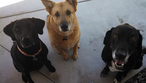 Dog socialization mistakes to avoid