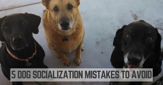 You're not making these dog socialization mistakes, are you?