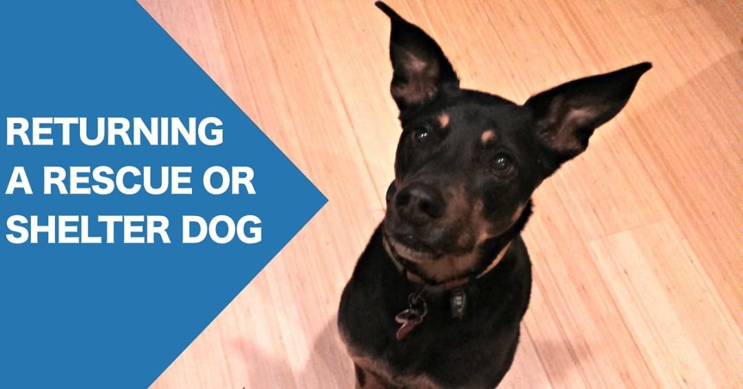 Returning a rescue or shelter dog