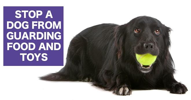 How to break a dog's possessiveness