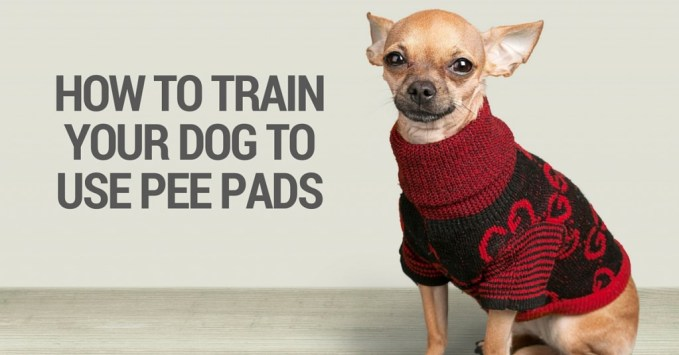 Teach your dog to use pee pads