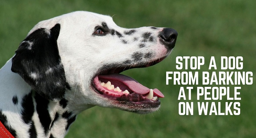 Stop a dog from barking at people on walks