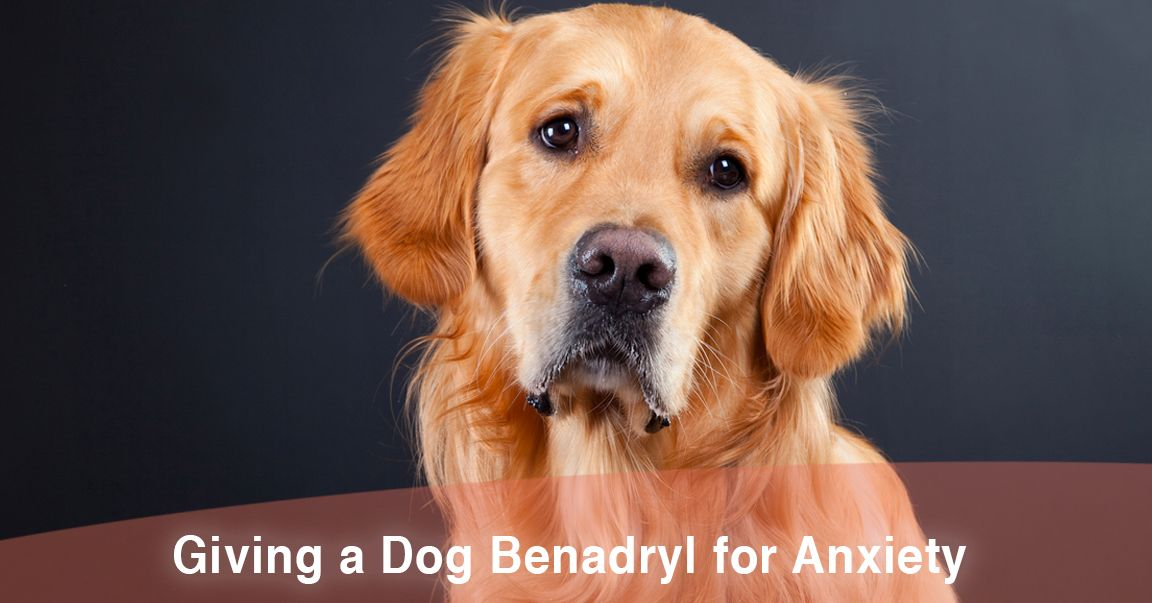 Benadryl for Dogs During Fireworks, Does it Work? | ThatMutt com