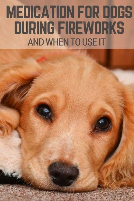 Medication for dogs during fireworks