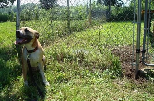 Baxter the escape artist