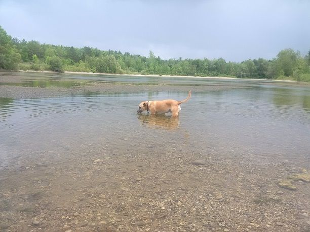 Does your dog like to swim